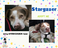 Please help us find Stargazer a forever home.